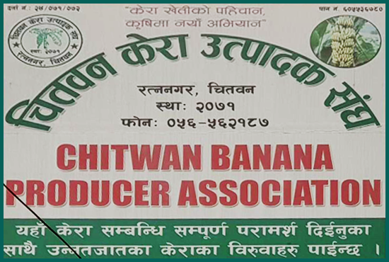 Chitwan Banana Producer Association