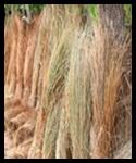 Straw, Broom Leaf & Bambo